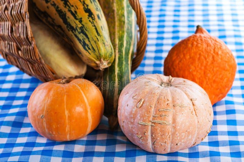 Download Pumpkins stock image. Image of dieting, autumnal, little - 22399457