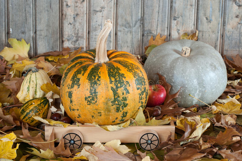 Download Pumpkins stock photo. Image of group, colored, nature - 23461076