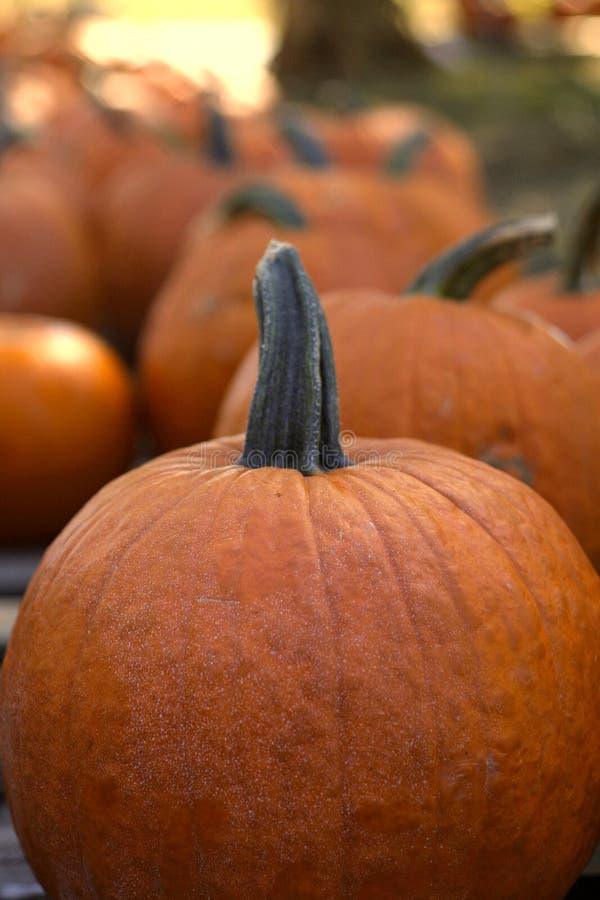Download Pumpkins stock photo. Image of vegetables, farm, colorful - 2456388