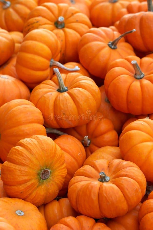Free Pumpkins Stock Images - 256324
