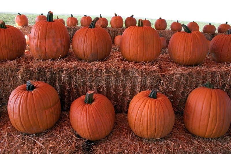 Download Pumpkins stock image. Image of pumpkins, pumpkin, fall - 259311