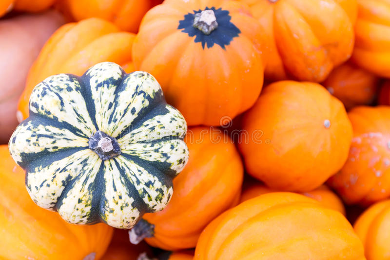 Download Pumpkins stock image. Image of produce, crop, plants - 26618659