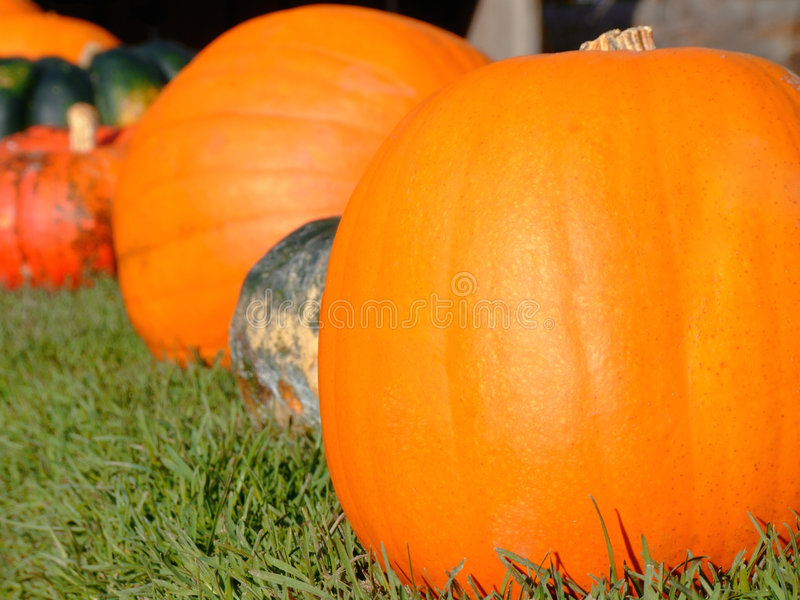 Download Pumpkins stock image. Image of background, colored, miniature - 3416641