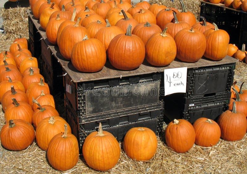 Pumpkins, $4.00 stock photo