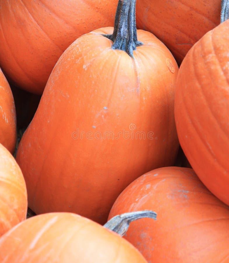 Free Pumpkins Royalty Free Stock Image - 6796236