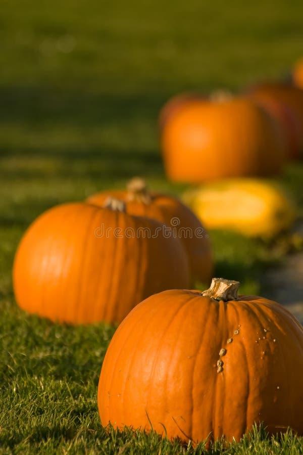 Download Pumpkins stock photo. Image of harvest, eating, orange - 8548316