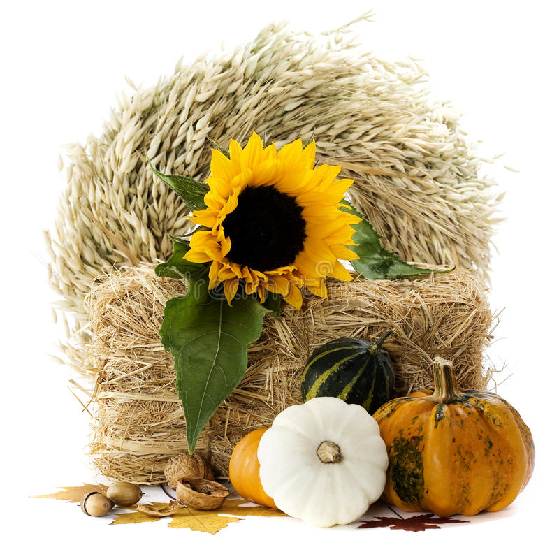 Free Pumpkins And Sunflowers Stock Photos - 11318523