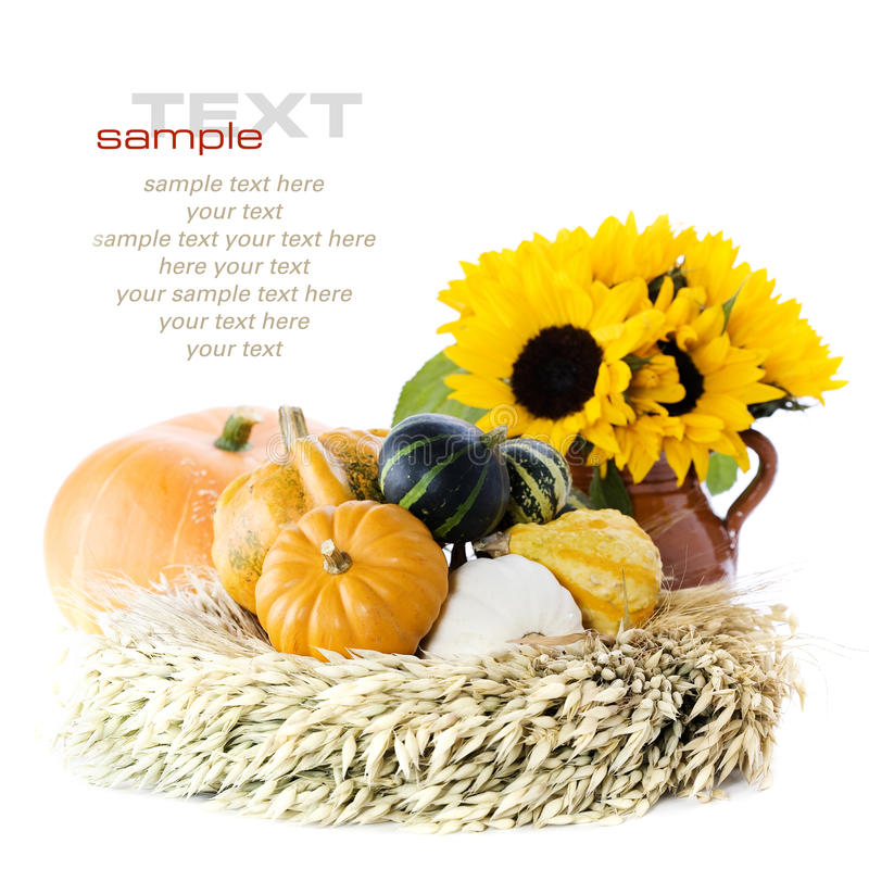 Free Pumpkins And Sunflowers Royalty Free Stock Image - 16224786