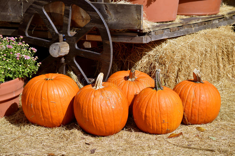 Download Pumpkins Around Am Old Farm Wagon Stock Photo - Image: 83707831