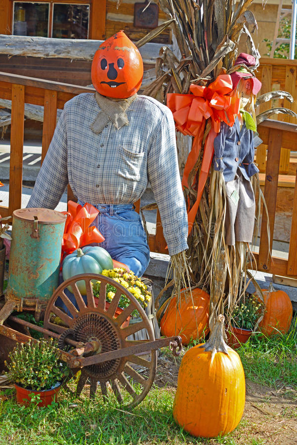 Free Pumpkins At A Fall Festival. Stock Photo - 49393570