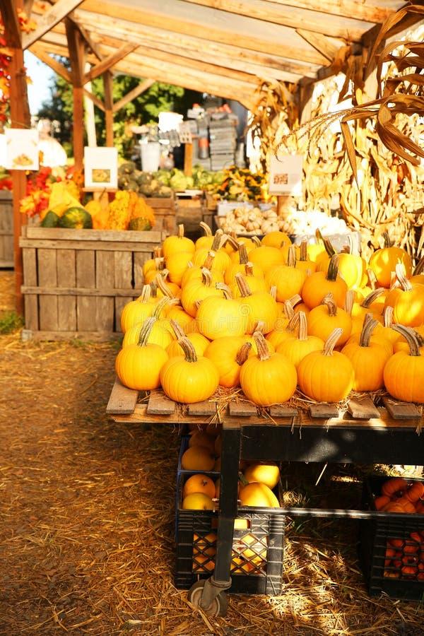 Pumpkins on the autumn market royalty free stock photo