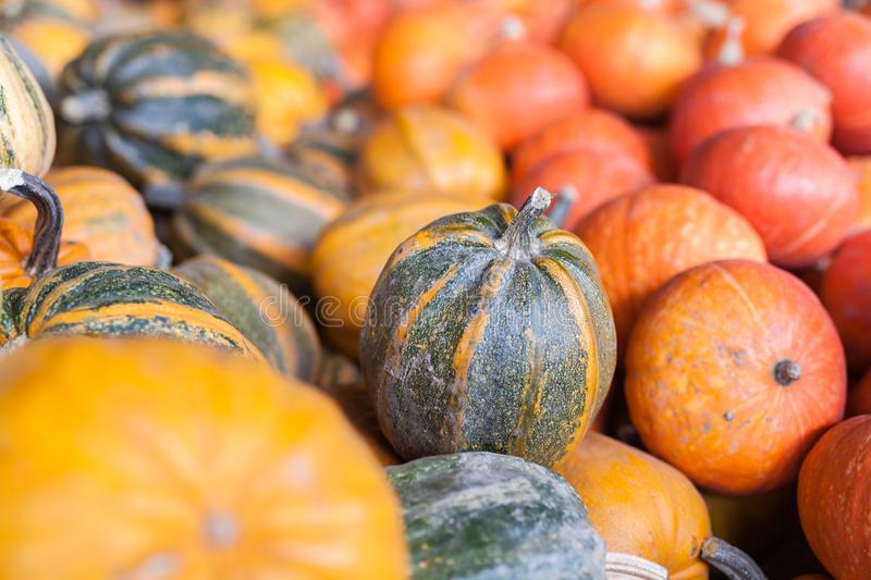 Pumpkins, autumnal harvest, small pumpkin, texture or autumn background royalty free stock images