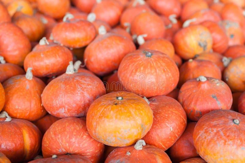 Pumpkins, autumnal harvest, small pumpkin, texture or autumn background stock images