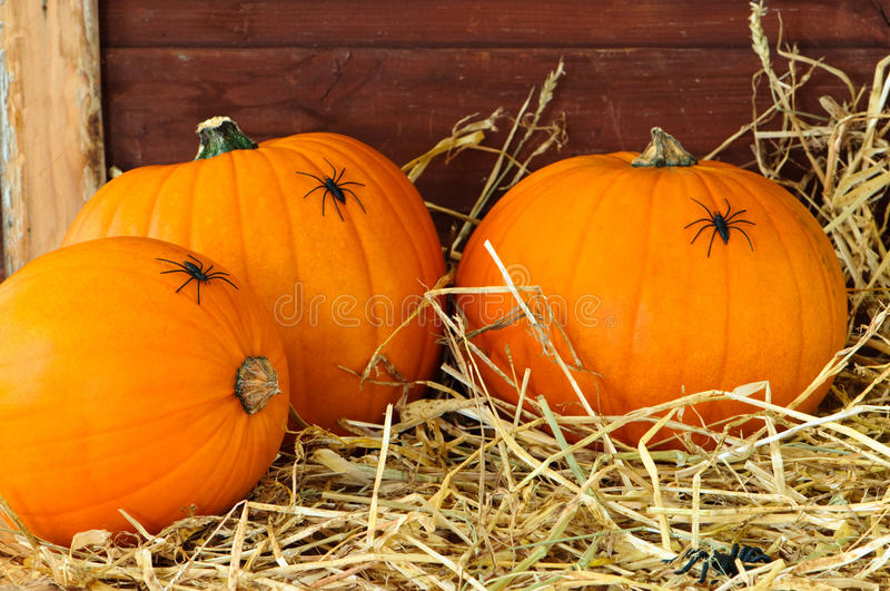 Download Pumpkins In The Barn stock image. Image of setting, gourds - 10922689