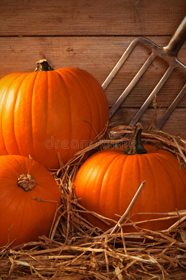 Download Pumpkins In The Barn stock photo. Image of straw, vegetables - 11039384