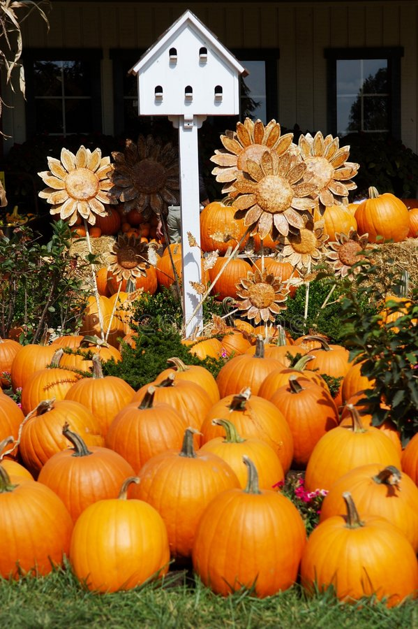 Pumpkins with Birdhouse and Sunflowers royalty free stock photos