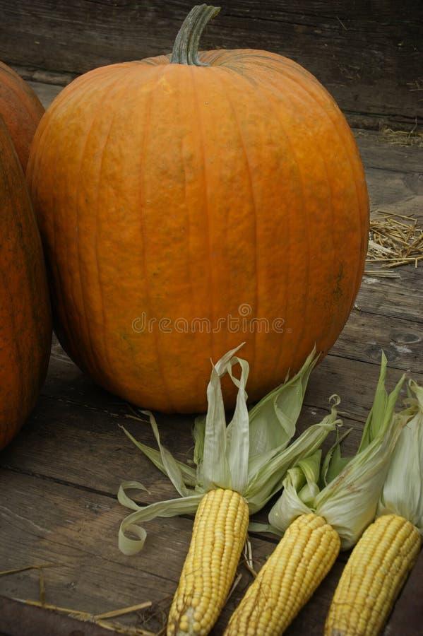 Pumpkins & corn stock photos