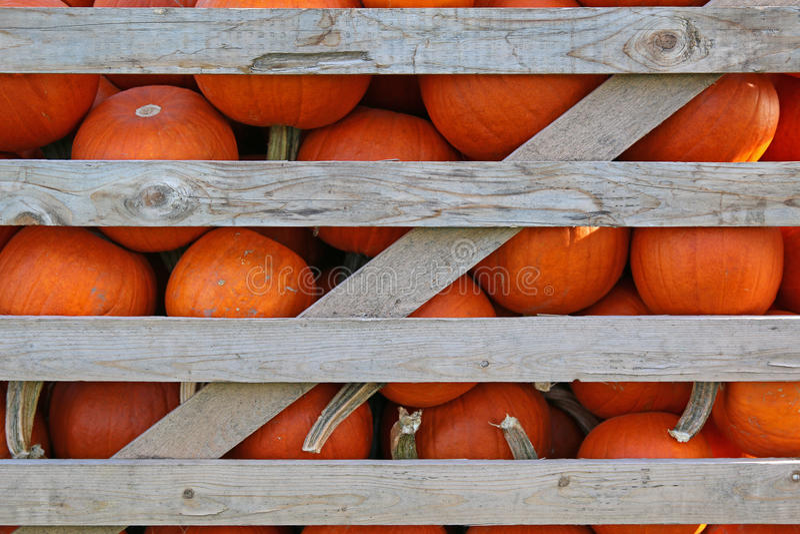 Pumpkins in crate. Orange pumpkins in wood slat crate stock photo
