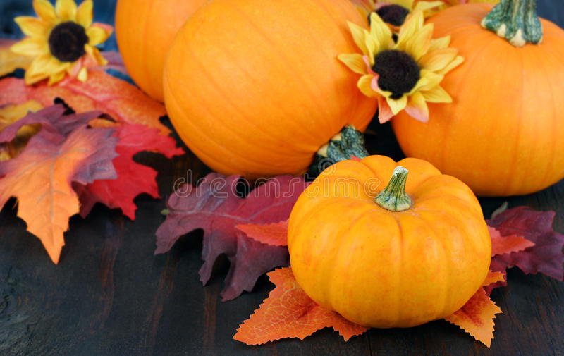 Pumpkins, daisies and fall leaves. royalty free stock photos