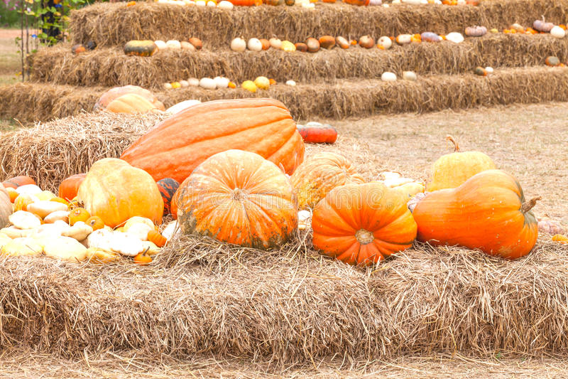 Download Pumpkins With Different Colours In The Field Stock Photo - Image: 30038968