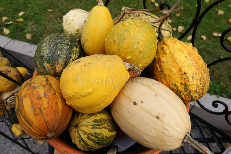Pumpkins in different varieties royalty free stock photo