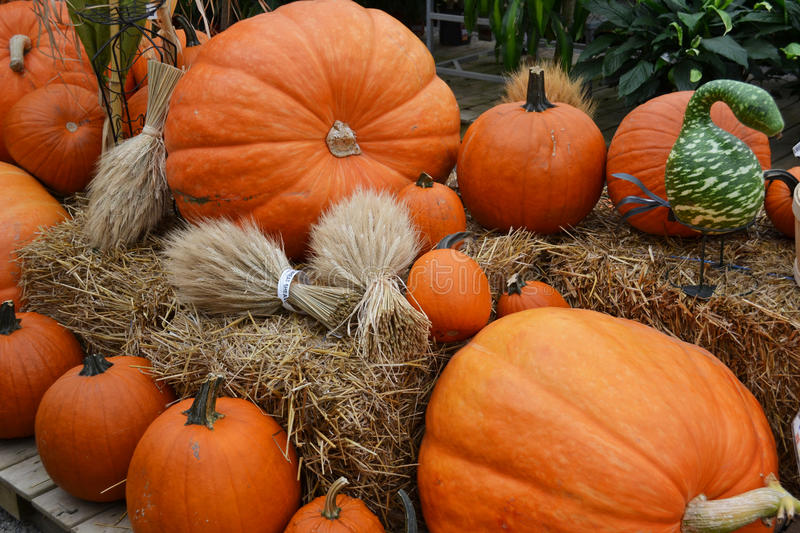 Pumpkins display on straw royalty free stock image
