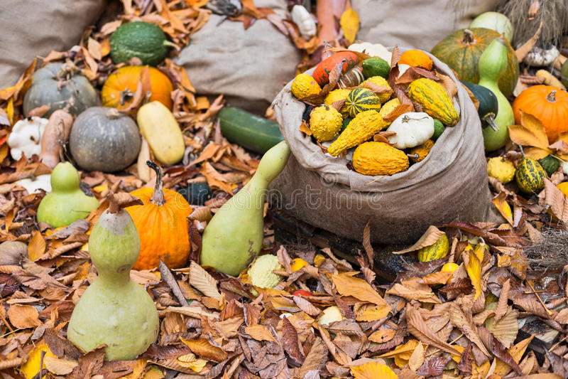 Download Pumpkins Diversity On The Ground Stock Photo - Image of nature, autumn: 83712394