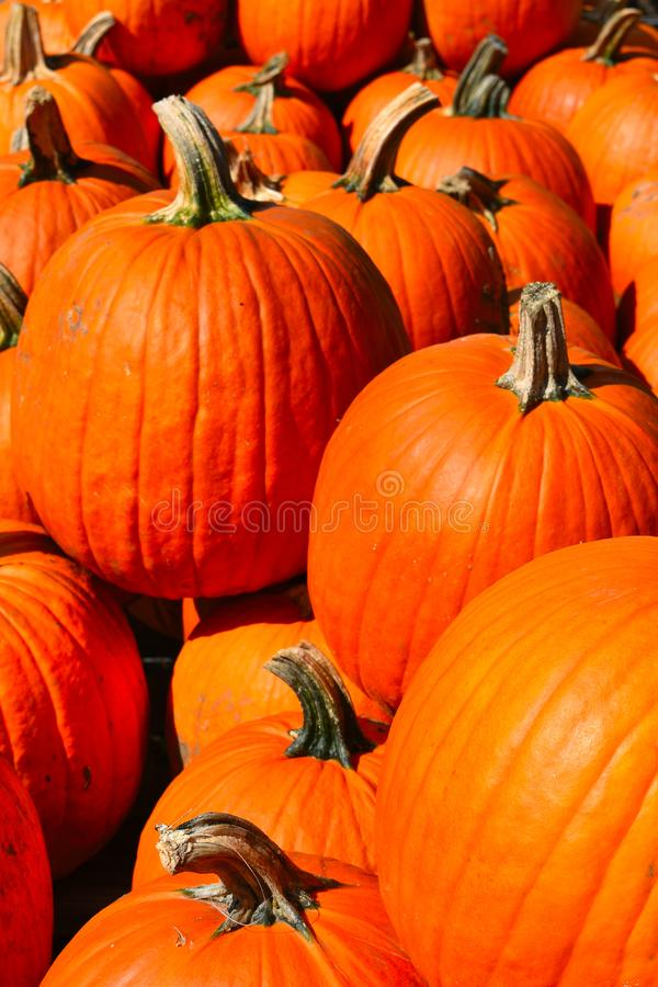 Pumpkins on a Fall day in Groton, Massachusetts, Middlesex County, United States. New England Fall. Colorful orange pumpkins on display at a farm in Town of royalty free stock image