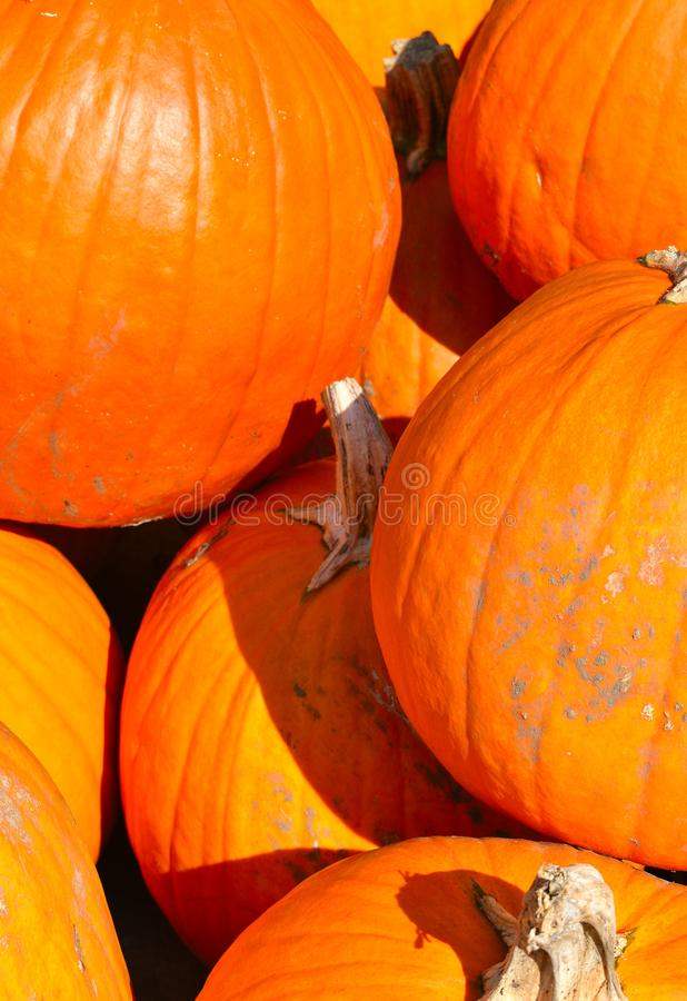 Pumpkins on a Fall day in Groton, Massachusetts, Middlesex County, United States. New England Fall. Colorful orange pumpkins on display at a farm in Town of stock photos