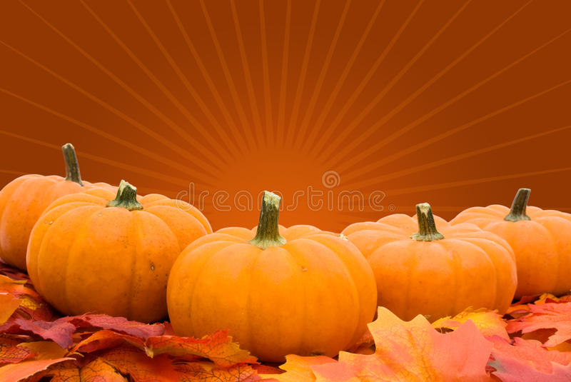 Pumpkins with fall leaves stock image
