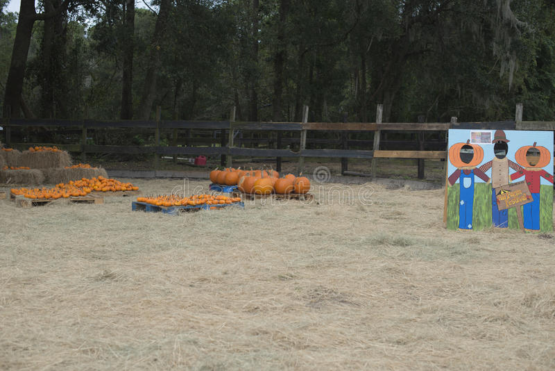 Pumpkins and farm activity decoration for kids stock image