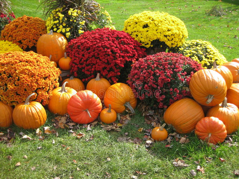 Pumpkins and flowers. Fall decorations of nature is on display in flowers and pumpkins stock photos