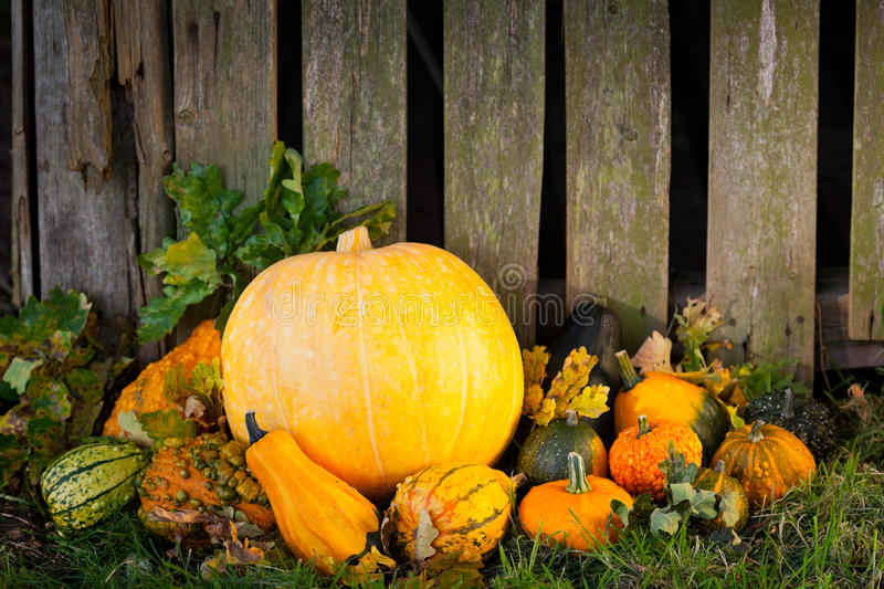 Pumpkins In Front Of Old Wood Royalty Free Stock Images