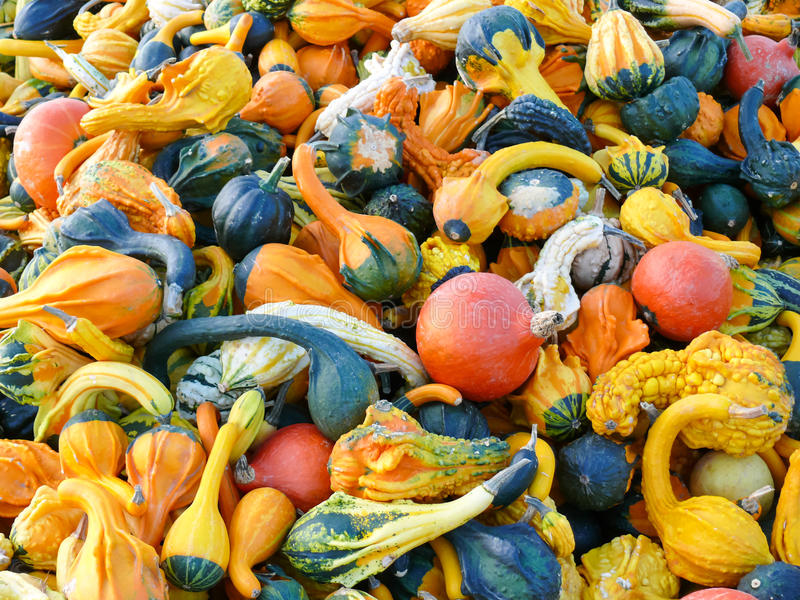 Download Pumpkins and Gourd Harvest stock image. Image of autumn - 33376253