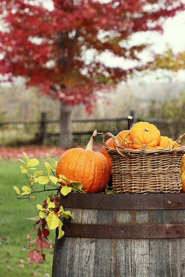 Pumpkins and gourds for autumn harvest royalty free stock images