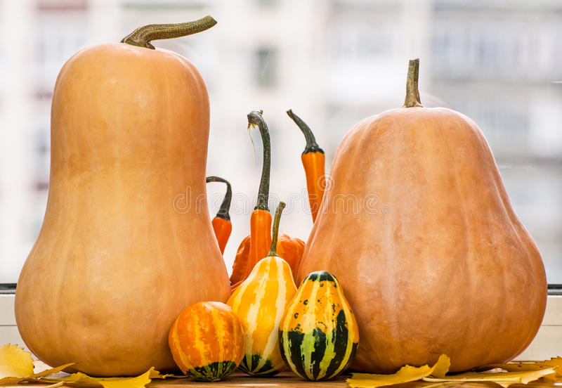 Pumpkins and gourds stock photography