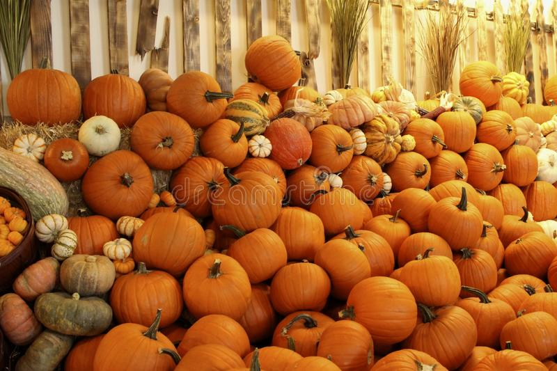 Pumpkins Gourds fence royalty free stock image