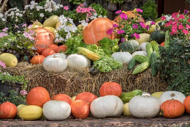 Pumpkins and gourds and Vegetables with flowers on display. Organic farm concept. stock photo