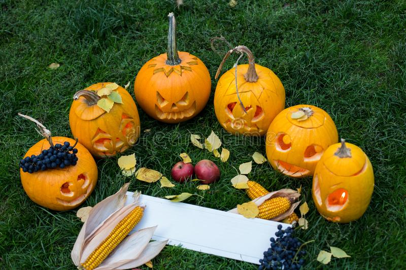 Ripe pumpkins for halloween on green grass background with autumn harvest and copy space stock photography
