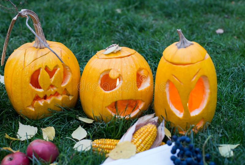 Ripe pumpkins for halloween on green grass background with autumn harvest and copy space royalty free stock image