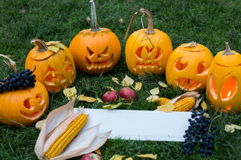 Ripe pumpkins for halloween on green grass background with autumn harvest and copy space stock image
