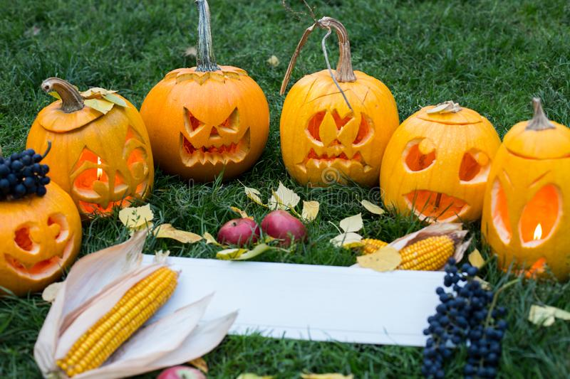 Ripe pumpkins for halloween on green grass background with autumn harvest and copy space royalty free stock photos