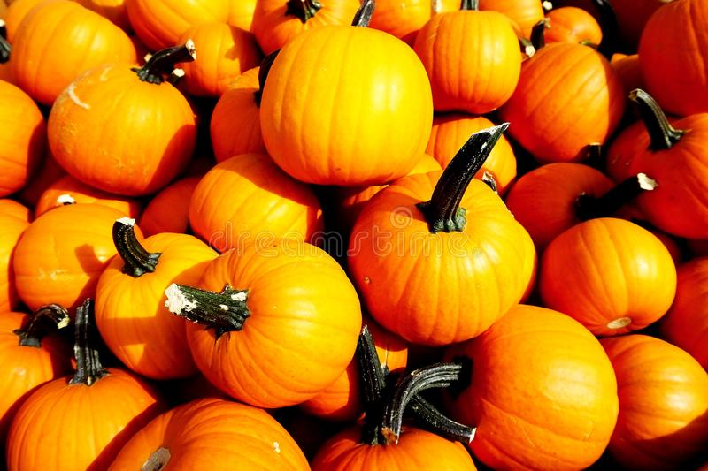 The pumpkins in Halloween royalty free stock photo