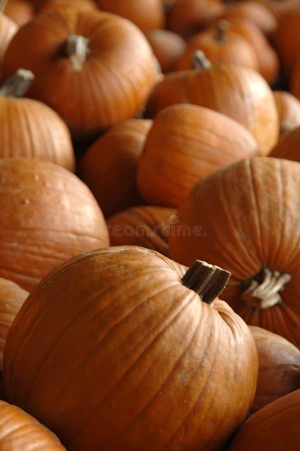 Download Pumpkins After Harvest Stock Images - Image: 1340624
