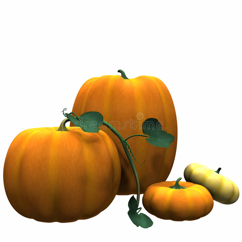Pumpkins Isolated. Autumn Pumpkins with Vine. Isolated on white stock illustration