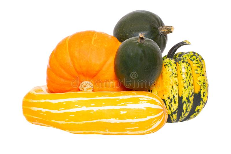 Pumpkins isolated. Autumn beginning and harvest of different kinds decorative colorful pumpkins isolated on a white background. stock image