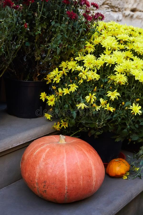 Pumpkins and Lots of Chrysanthemum flowers royalty free stock photography