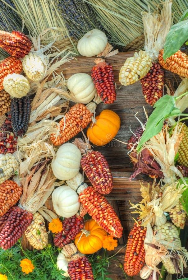 Pumpkins and maize / corn stock photography