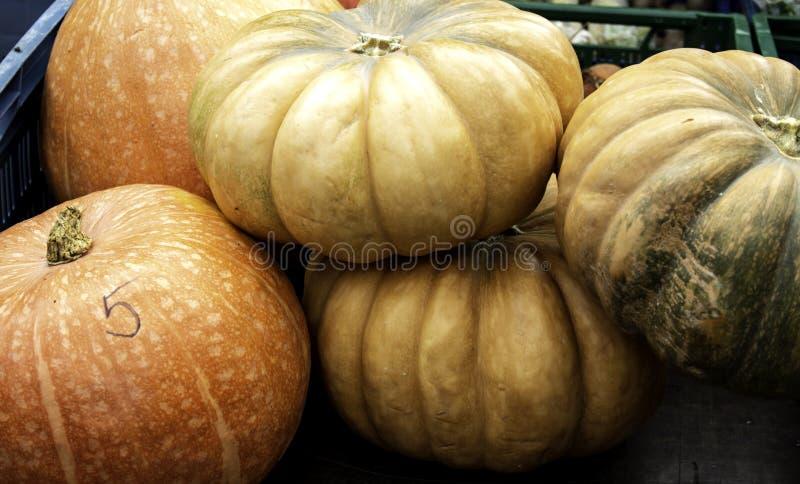 Pumpkins and market stock photo