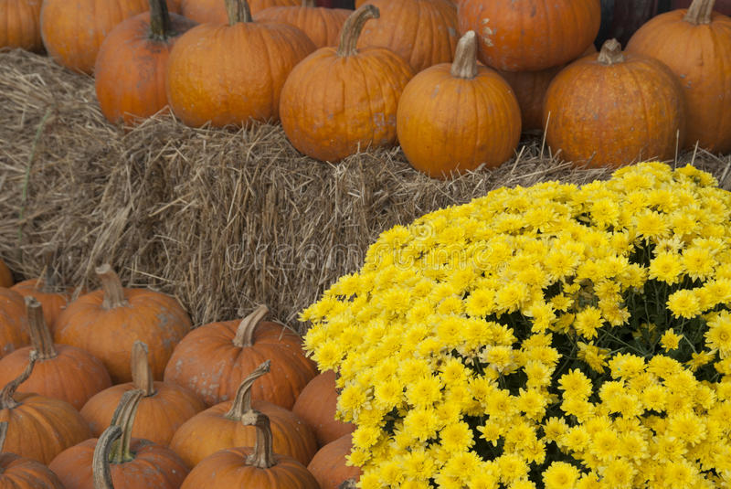 Pumpkins and Mums. Still life of pumpkins, chrysanthemums with bales of hay stock photo
